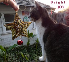 Bright Joy (Room With A View) Tags: wiki cat kitty star hand odc christmas