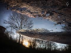 The Mirror Of The Soul... (Beppe Cavalleri - www.beppecavalleri.com) Tags: fujinon4528 beppecavalleri winter reflex water lake mirrorless sun fujifilmgfx50r tree river wonderful colors mediumformat nature sunset beautiful wwwbeppecavallericom