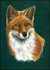 Mr FOX (KING JOHN 1) Tags: fox predator pastelpainting pastels animal nature red jak johnking
