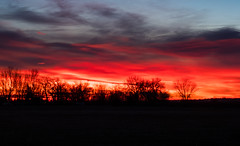 20/365 2019 (d2roberts) Tags: 365the2019edition 3652019 day20365 20jan19 sunrise colorado pink red clouds trees fortcollinsnaturalareas ourdailychallenge odc