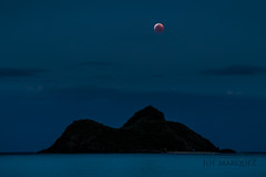 super blood wolf moon lanikai hawaii joe marquez-2337 (The Smoking Camera) Tags: supermoon bloodmoon wolfmoon redmoon lunar eclipse mokulua islands mokes lanikai beach kailua oahu hawaii windward moonrise nikon d850 longexposure fullmoon full moon red blue sky night