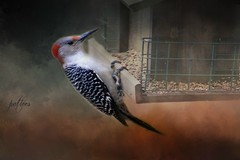 Woody.... (Patlees) Tags: woodpecker redheaded nc 2019 textured group texturaltuesday dt textures redbelliedwoodpecker