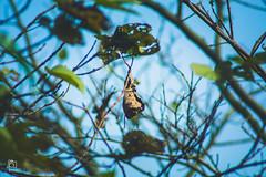 Dead Leaf (arif.hasan44) Tags: landscape sunset rural ari solo sky ree bird animal leaf nikon photography tree