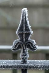 _IMG1948 Hoar Frost on iron railing spike (Pete.L .Hawkins Photography) Tags: misty walk hoober wentworth near rotherham petehawkins petelhawkinsphotography petelhawkins petehawkinsphotography pentax hd pentaxd fa 2470mm f28 ed sdm wr