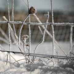 Morning frost (Valérie C) Tags: frost wire winter nature snow fence frozen