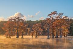 Morning lights on bald cypress (FollowingNature (Yao Liu)) Tags: bayou sunrise morningmisty foliage fallfoliage fallcolors visittexas followingnature swampcypress baldcypress caddolake