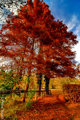 Redhead (Peter Szasz) Tags: hungary hajdúbihar magyarország hajdu debrecen trees tree wood wooden walk walkway park path tranquil trail red hdr leaves branches bright brown branch autumn fall peaceful colourful clouds sky october blue green outside outdoors wide wideangle nature calm clear canon