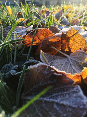 First frost (badger_beard) Tags: duxford cambs cambridge cambridgeshire south frost morning sunrise winter