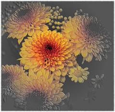 flower (lucianomandolina) Tags: blumen bunt frühling schön rot gelb grün blüte blätter flower colorful spring beautiful red yellow green art