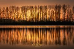 "Evening sun at nature reserve area ""Bislicher Insel"" (nigel_xf) Tags: naturschutzgebiet bislicherinsel protectedarea sun evening sunset sonnenuntergang abendsonne trees bäume reflection reflexion reflektion spiegelung nikon d300 nigel nigelxf vsfototeam golden xanten ginderich"