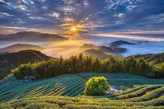 大崙山~夕照茶園~ Tea farm Sunset (Shang-fu Dai) Tags: 台灣 taiwan 南投 clouds 雲海 cloudssea nikon d800e sky 大崙山觀光茶園 銀杏森林 武岫 landscape formosa sunset 夕彩 af20mmf28d 星芒 日落 戶外 雲 風景 山 天空