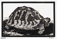 Turtle by Julie de Graag (1877-1924). Original from the Rijks Museum. Digitally enhanced by rawpixel (Free Public Domain Illustrations by rawpixel) Tags: animal antique art artwork black drawing handdrawn illustrated illustration illustrator juliedegraag old pdrijks publicdomain rijksmuseum sketch turtle vintage white woodcut