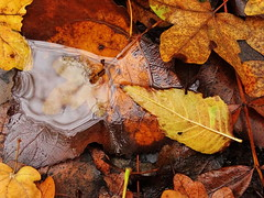 Autumn18 (237) (The-Beauty-Of-Nature) Tags: autumn fall herbst cozy mine november nature photography original leafs blätter orange brown braun red rot wet nass water wasser