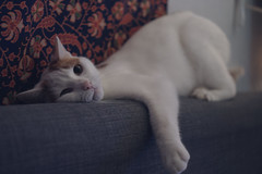 (louis_de_fines) Tags: nice lovely beautiful tired mignon chat cat animal hair roux ginger white snow hear sleep portrait closer sony a6000 ilce 35mm f18 18 oss rascal cute love play playing game catch lain