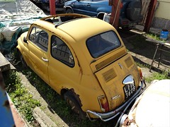 1972 Fiat 500 L (Alessio3373) Tags: abandoned abandonment abandonedcars autoabbandonate unused unloved neglected forgotten forgottencars scrap scrapped scrappedcars rust rusty rusted rustycars corroded corrosion ruggine fiat fiat500 fiat500l targhenere blackplates
