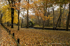 Walk In The Park (John Gilbert Photography) Tags: fall color stjames landscape