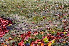 _MG_9194 (Marco Dioguardi) Tags: autunno leaf leaves green foglie autumn red
