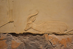 Chicago, IL - University of Chicago - Oriental Institute - Egyptian - Reliefs from the Tomb of Nespakashuty (jrozwado) Tags: northamerica usa illinois chicago universityofchicago university museum orientalinstitute middleeast neareast history archaeology egyptian relief tomb nespakashuty gazelle