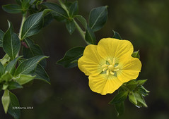 Florida Fall Flower (Gatorgirl51) Tags: flower yellow florida nikon 7100