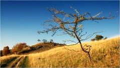 Zerzaust (linke64) Tags: thüringen deutschland germany natur landschaft himmel herbst hügel weg bäume berge blätter wiese gras