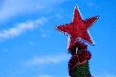 Red Christmas Star (MarkusR.) Tags: d722759 mrieder markusrieder stuttgart germany wilhelma zoologischergarten zoo park botanischergarten zoologicalgarden botanicalgarden nikon d7200 nikond7200 christmasstar weihnachtsstern decoration dekoration weihnachten christmas