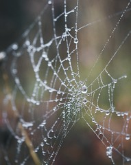 Nature photography (danoial) Tags: spiderweb spider drops droplet danoial vsco nature