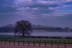 The fog and the tree (Paul Wrights Reserved) Tags: tree fog fence cloud clouds cloudscape mood moody evening trees hedge sky skyscape composition landscape landscapes landscapephotography fencefriday hff
