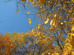 leaves (cloversun19) Tags: gold rain animal field grass landscape branches leafs foliage sky russia russian spb tree walking country holiday holidays park garden dream dreams positive forest happy view grey legend fairytale fir firtree birch village evening romantic october september car road street blue maple leaves town city light sun yellow autumn trees