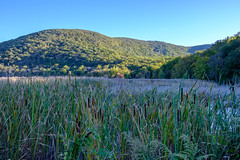 DSCF2233 (thedoc31) Tags: bear mountain state park new york newyork marsh marshland protected