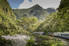 Tren a Machu Pichu (Txaro Franco) Tags: tren ferrocarril cruce trenes machu pichu perú selva valle verde descenso vilcanota río river ibaia arana valley paisaje vía trenbidea railway montaña mendia mountain