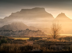Navarra foggy sunrise in Bardenas A737455 (joana dueñas) Tags: spain navarra fog sunrise tree joanadueñas photofeeling landscape desert