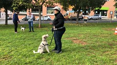 IMG_8581 (Doggy Puppins) Tags: educación canina adiestramiento canino perro dog