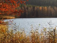 IMG_4089d (germancute) Tags: outdoor nature autumn herbst landscape landschaft thuringia thüringen germany germancute deutschland forest wald mond pilz see fall