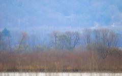 bald eagles near Brownsville MN 653A8944 (naturalist@winneshiekwild.com) Tags: bald eagles pool 8 mississippi river brownsville minnesota larry reis