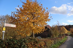 IMG_4967 (Bluecloud9) Tags: aachen autumnfall forest nature