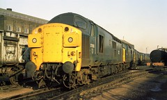Class 37 line-up at Stratford in December 1982 featuring 37053 nearest the camera, followed by 37105, 37115, 37070, 37001 and 37094. (colin9007) Tags: stratford br diesel englishelectric class 37 37053 37105 37115 37001 37070 37094 d6794 d6770 d6701 d6815 d6805 d6753