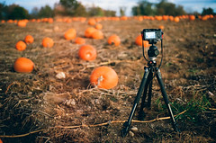 Edit -1-10 (Dane Van) Tags: minolta xg1 minoltaxg1 50mmf2 fall autumn michigan oaklandcounty analog film x100f fuji fujifilm manfrotto lomography lomo