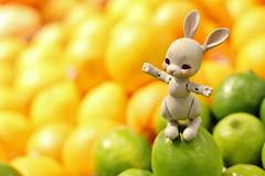 Lemon Lime (AluminumDryad) Tags: cocoriang tobi anthrobjd tinybjd balljointeddoll resin bunny rabbit citrus lemons limes grocerystore kroger