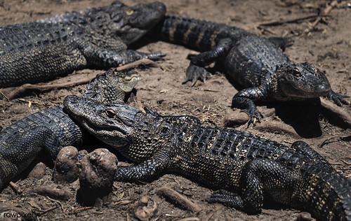 Alligator Adventure, a fourteen-acre theme park of sorts that calls itself the