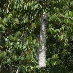 Wasp nest thumbnail