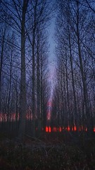 On fire (Jaco Verheul) Tags: sunset forest winter sky landscape red snapseed samsung phonephoto