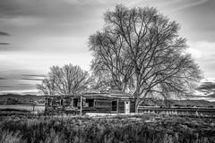 Mack, Colorado (paccode) Tags: solemn d850 landscape brush blackwhite quiet abandoned monochrome farm house colorado tree scary forgotten home serious creepy loma unitedstates us