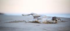 In winter (rischefantorus) Tags: dog sea winter beach