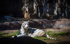 Relaxing (alphawolf_2013) Tags: colors alphawolf2013 colores zoo animals zoologico guatemala