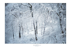 White clothes (Rita Eberle-Wessner) Tags: forest wald woods schnee snow winter baum tree bäume trees winterwald winterforest white weis zauberwald magic verzaubert framed gerahmt whiteclothes odenwald