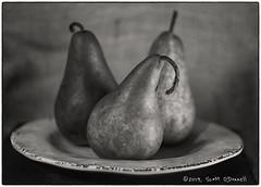 Pear Plate in B&W (scottnj) Tags: 365the2019edition 3652019 day32365 01feb19 pear bosc boscpear boscpears pears fruit food plate monochrome bw stilllife scottnj scottodonnellphotography
