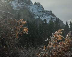 Tatra mountains (Janis Sabanovs) Tags: nature mountains autumn tatra hike hiking light travel track