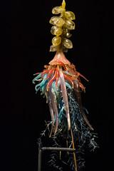Blaschka Glass Model - Natural History Museum London (nickstone333) Tags: naturalhistorymuseum london museum siphonophore glass model blashka atxm100afprod tokinaaf100mmf28macro nikon nikond7100 d7100