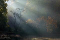 Morgensonne (Frank Heldt Photography) Tags: dortmund rombergpark sonne sonnenaufgang sonnenuntergang sonnenstrahlen canon 5dmarkiv herbst autumn mystic mystik
