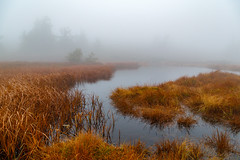 Fog (tods_photo) Tags: ifttt 500px landscape water fog yellow soft colours nglt